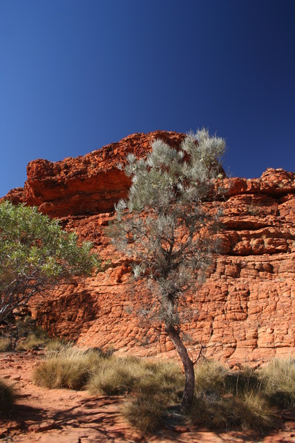Kings Canyon (27)