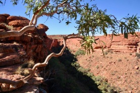 Kings Canyon (63)