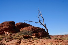 Kings Canyon (71)
