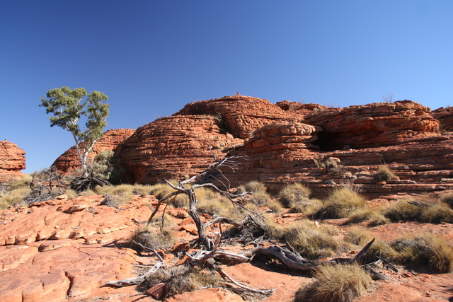 Kings Canyon (76)