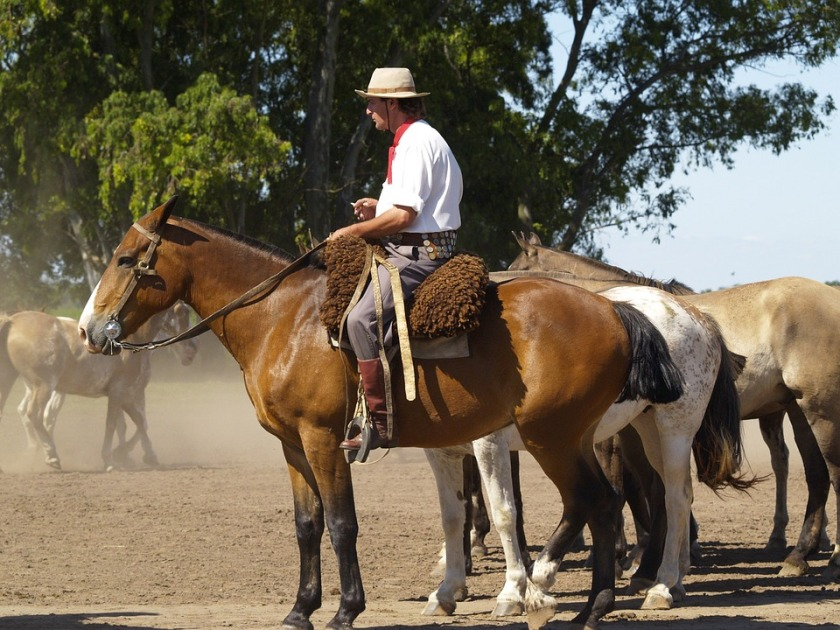 horses-52701_960_720