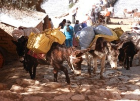 Donkeys are the only transport on Isla del Sol