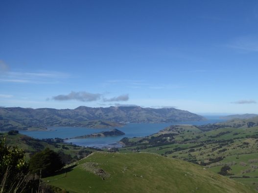 Akaroa - the view from above