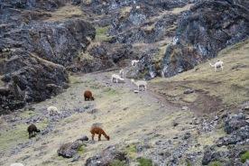 Lares to Ollantaytambo Trek (134)