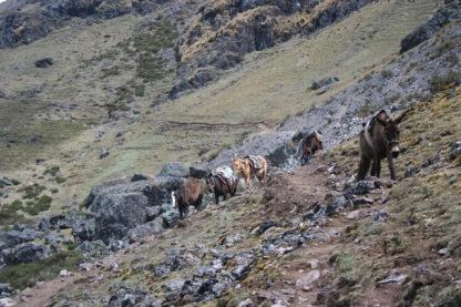 Lares to Ollantaytambo Trek (144)