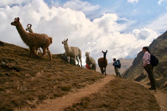 Lares to Ollantaytambo Trek (209)